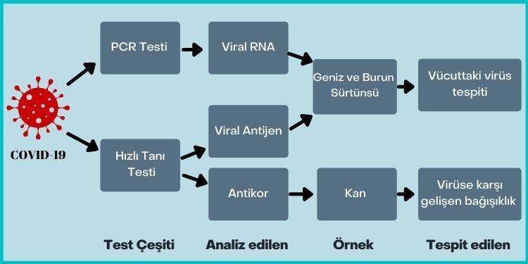 Koronavirüs test kiti prosedürleri